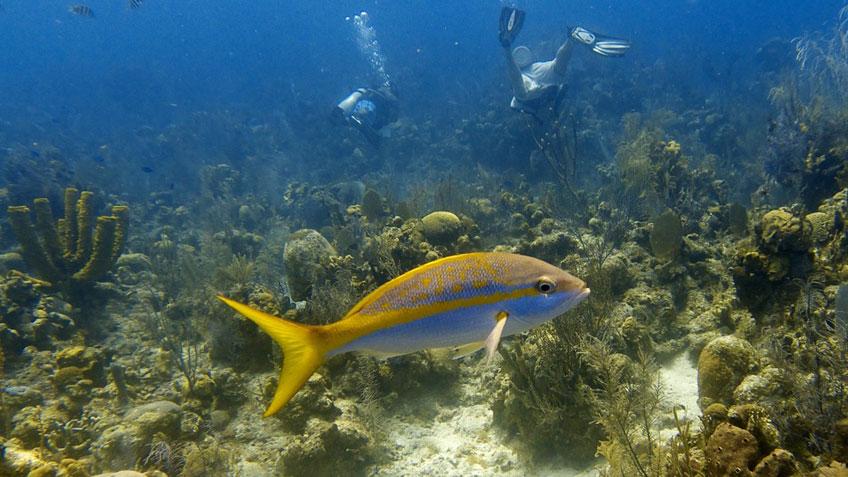 Gelb-blauer Fisch unter Wasser