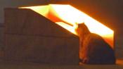 Katze vor einem Scheinwerfer