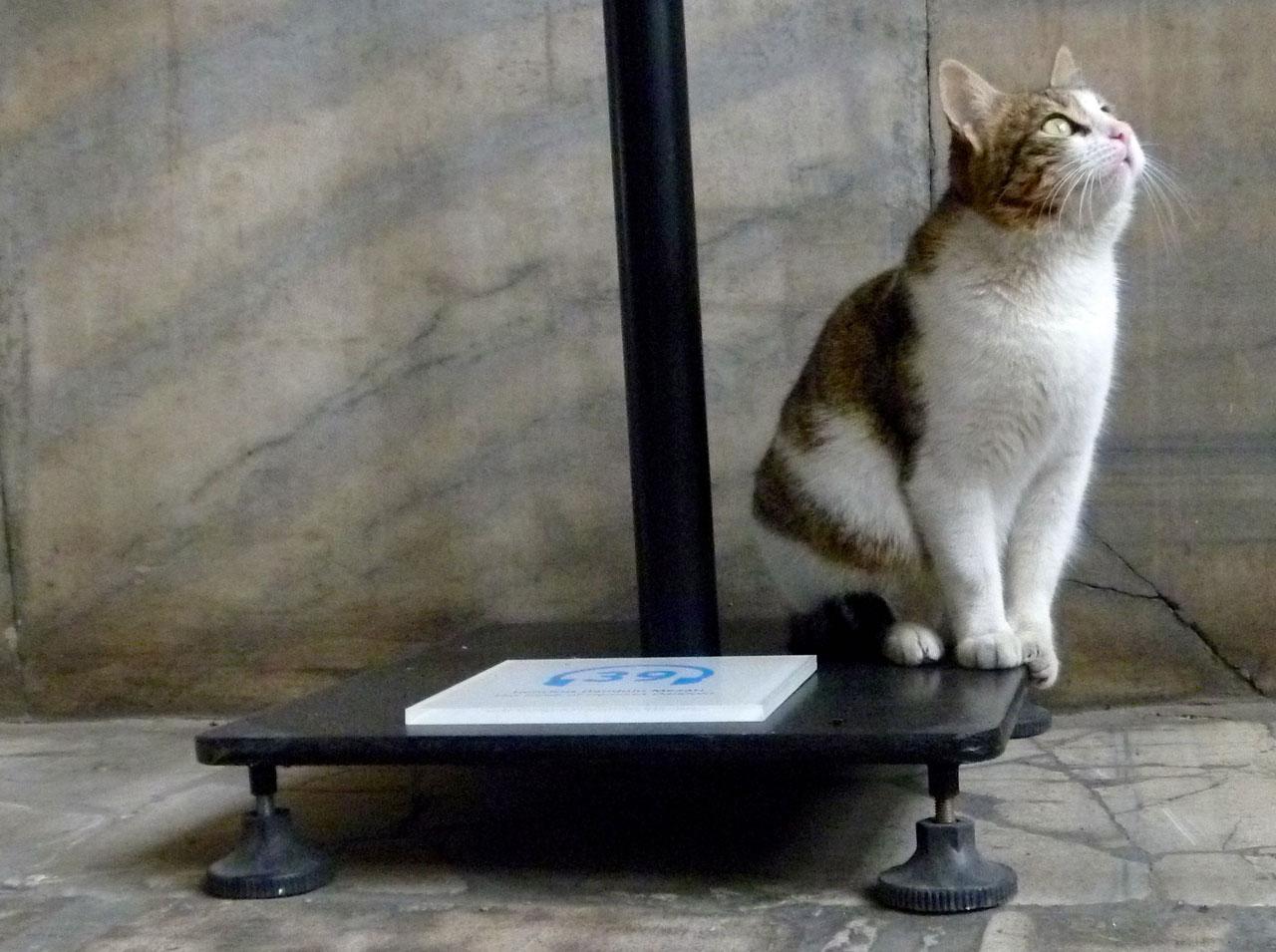 Katze in der Hagia Sophia, Istanbul